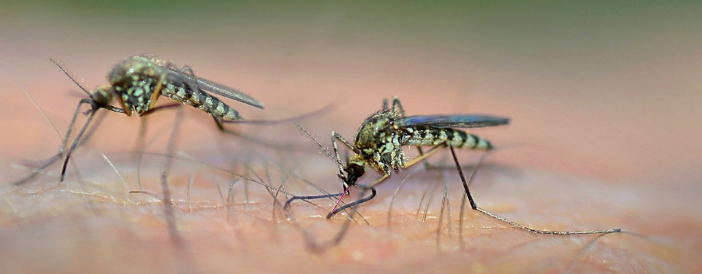 ¿Qué debemos saber sobre los repelentes de insectos?