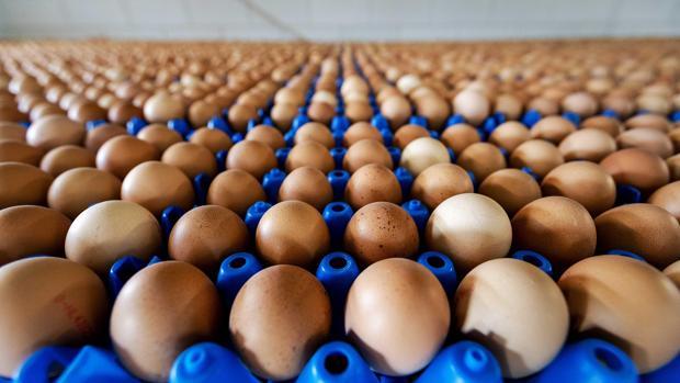 Hasta el momento no se han detectado huevos contaminados en España